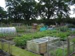 Church Road Allotments